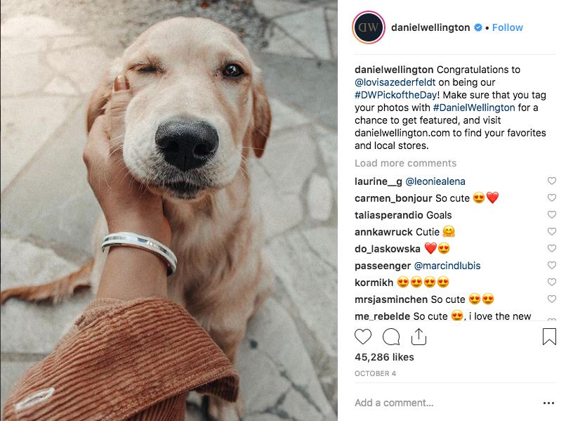 Influencer Marketing Dog